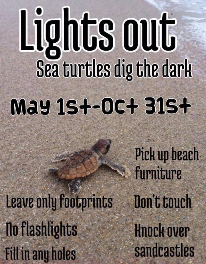 SeaTurtleLightsOutGraphic